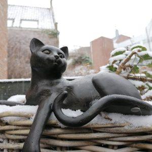 Kattenbeeld.
