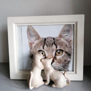 Fotolijstje katten.