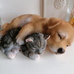 Beeld kat en hond slapend