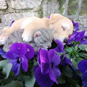 Beeld kat en hond slapen