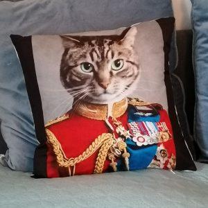 Kattenkussen kat in pak