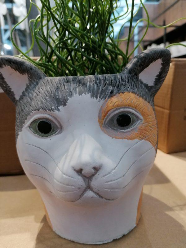 Plantenpot kat