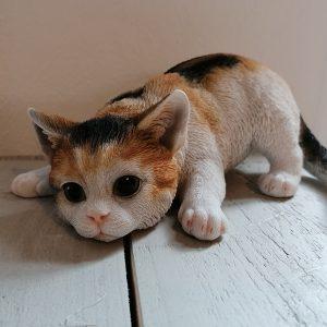 Kattenbeeld