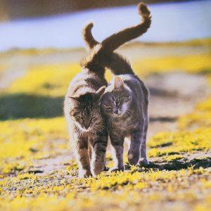 Kaart katten
