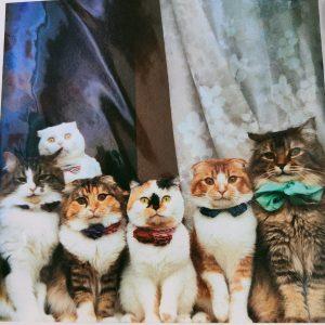 Katten kaart