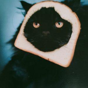Kaart zwarte kat