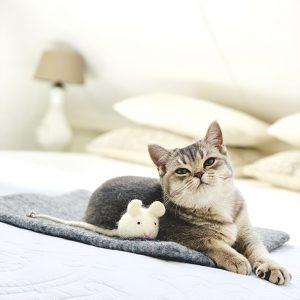 Viltten kattenspeeltje voor urenlang speelplezier.